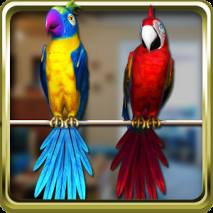 Talking Parrot Couple Free Cover