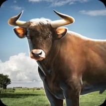 Bull Simulator 3D dvd cover