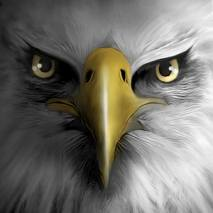 Eagle Play dvd cover